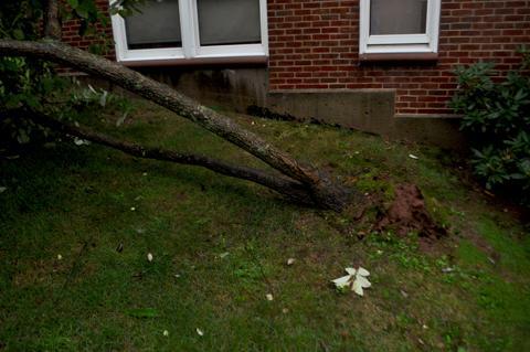 Fallen Tree by Old Village