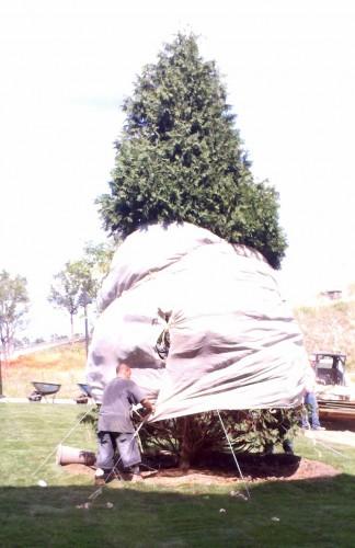tree tied
