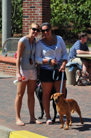 Fun in the sunA dog graces Quinnipiac's campus Thursday afternoon.