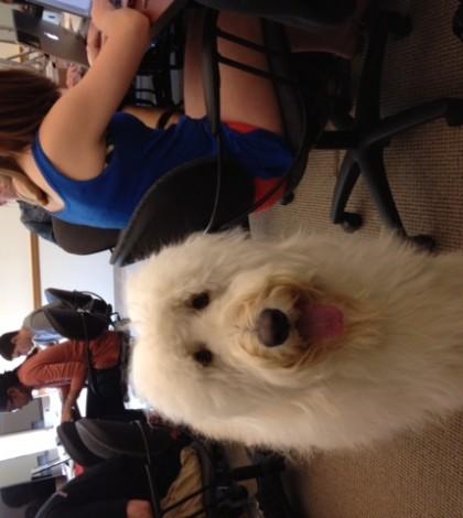 Milo, Paul Friedmans dog