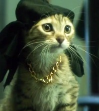 In the comedy directed by Peter Atencio starring Keegan-Michael Key, Jordan Peele, the main character Keanu is played by multiple different cats.